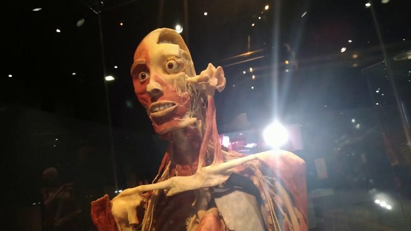 Музей анатомии в Лос Анджлeсе.