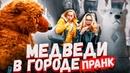КТО БОИТСЯ МИШКУ ПРАНК / Реакция на ЖИВОГО МЕДВЕДЯ / Вджобыватели