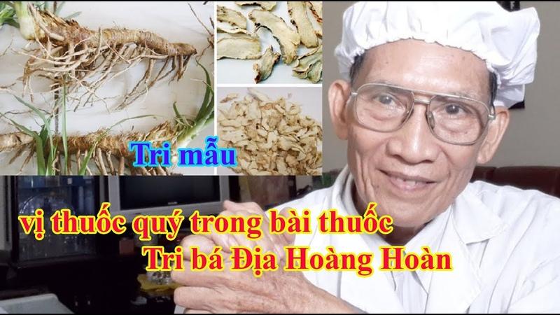 Tri mẫu vị thuốc quý trong bài thuốc Tri bá Địa Hoàng Hoàn l Nguyen Thieu Official