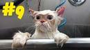 9 Смешные коты 😹 Приколы с кошками 2021 🤣 Смейся до слез 😂 Смешные котики