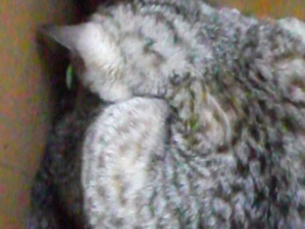 рождение второго котёнка