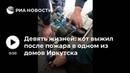 Девять жизней кот выжил после пожара в одном из домов Иркутска