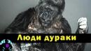 3 животных, которые могли говорить и оставляли печальные сообщения человечеству
