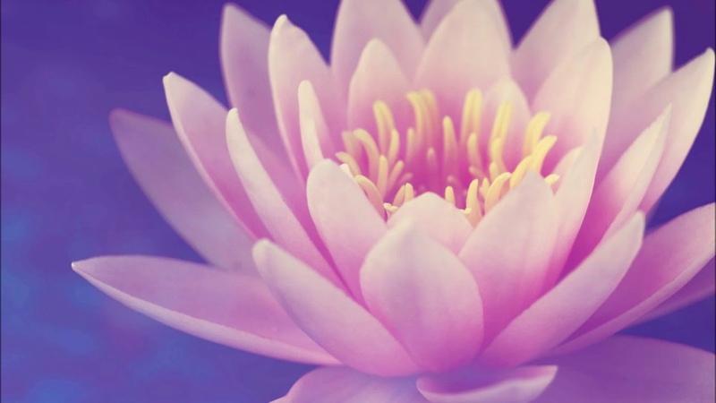 Лотос любви - Краткая медитация для мира и умиротворения . Lotus of Love - Short Guided Meditation for Peace Tranquility