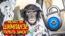 ФАНТАСТИКА Шимпанзе открывает замок Дан Запашный и приколы обезьян на улице Смешные животные 2020