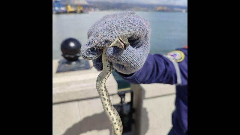 На набережной Новороссийска спасатели поймали змею