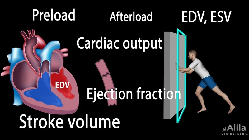 Cardiac Output, Stroke volume, Ejection Fraction