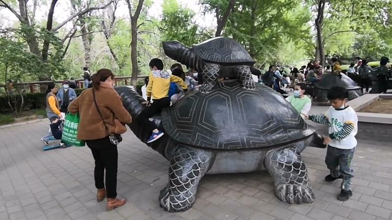 Змеи, Ящерицы, Игуаны, Гекконы в пекинском зоопарке