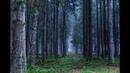ЛАЗЕРТАГ - ВЫИГРАЛИ В СУХУЮ! Открытая игра, в заброшенном лагере, в лесу