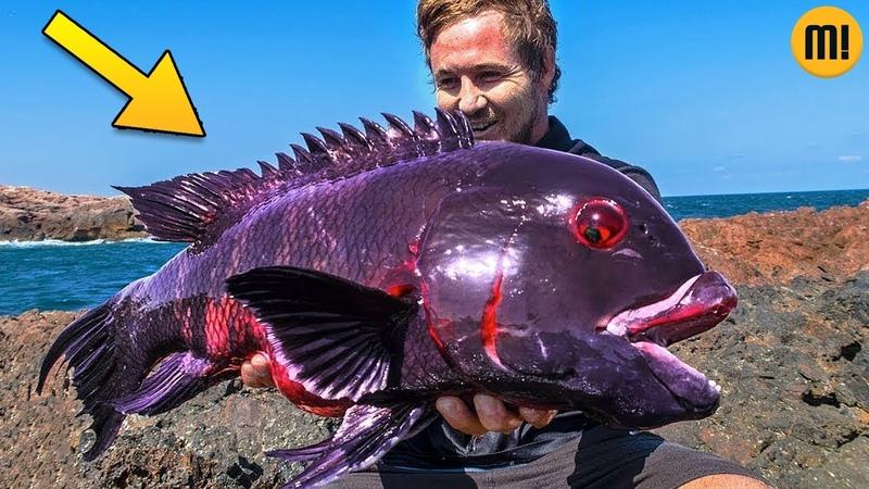 Esse Estranho peixe está deixando a internet maluca!