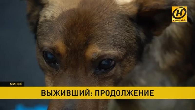 Жизнь после кошмара Собака которую закопали заживо продолжение истории Делом занялась милиция
