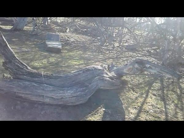 Я́блоня коло́ния ботанический памятник природы Сумская обл г Кролевец