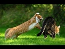 Самые жестокие драки котов