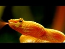 Жизнь змей в дикой природе в мельчайших деталях в хорошем качестве HD