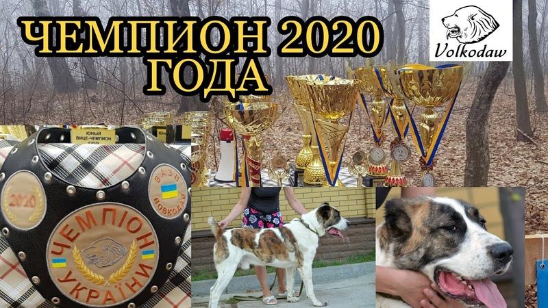 Шаг за шагом Кувват стал Чемпионом Украины 2020 года Alabai