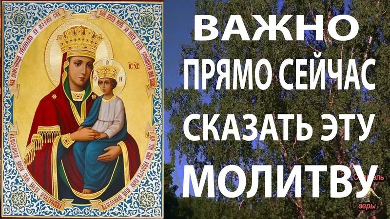 Прямо сейчас скажи эту молитву к Богородице о помощи! Споручница Грешных акафист Божией Матери