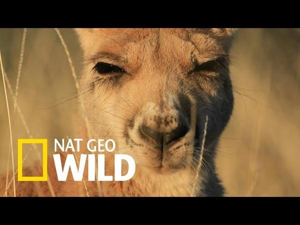 Nat Geo Wild Дикие животные 24 часа Австралия после муссона