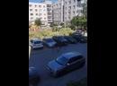 Лось в Петербурге