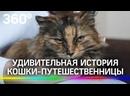 Кошка-разведчица устроила переполох среди военных и заставила их поменять маршрут
