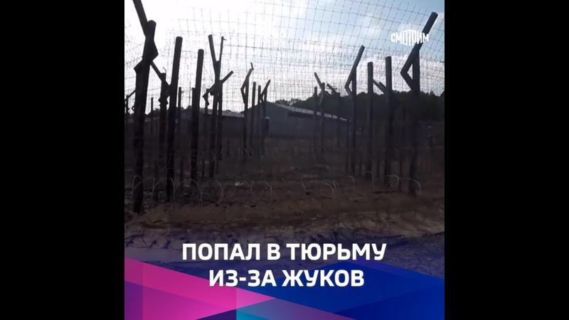 Мертвые жуки довели российского ученого до ареста и госпитализации