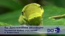 Яд. Достижение эволюции - Часть 3. Ядовитая война растений и животных - Документальный фильм
