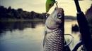 Рыбалка на реке Дон, Рыбалка на спининг, судак, щука, голавль рыбалка в Воронежской области