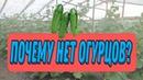 Хотите научиться выращивать огурцыНаш опыт выращивания огурцов.